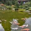 ryby v jezirku