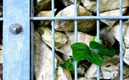 gabionovy plot